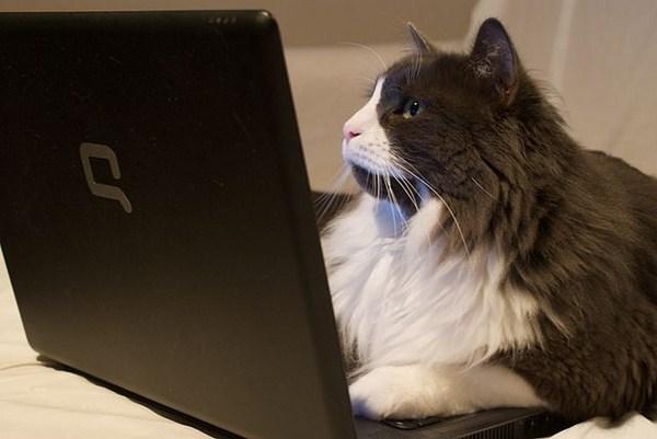 Tips Mengupdate Konten Di Blog