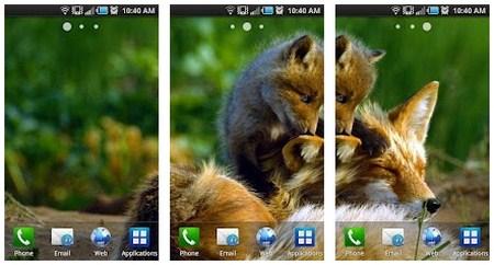 Cara Menampilkan Background Bing Sebagai Wallpaper Android Anda