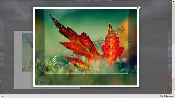 Croppola: Web Apps yang Secara Cerdas Meng-Crop Gambar Berdasarkan Obyek Dominan