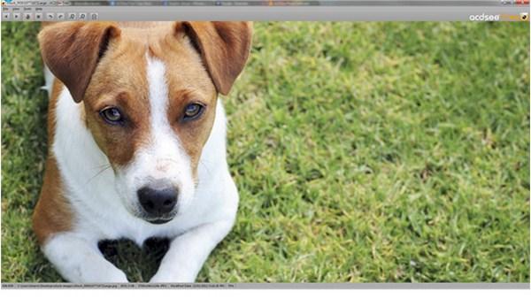 Sekarang ACDSee Image Viewer ada Versi Gratisnya!