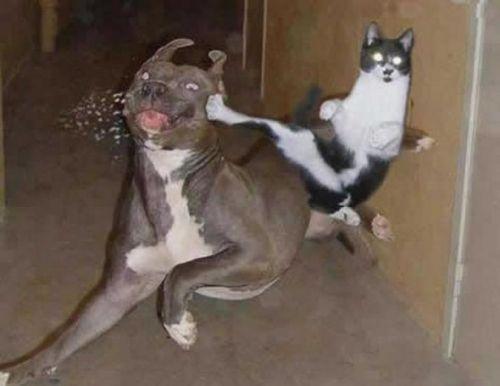 7 Situs Berisi Kucing yang Konyol, Lucu, Gemesin dan Ngeselin