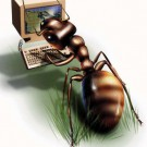 12-Ants Program ini Membuat Layar Komputer Kamu Dipenuhi dengan Semut