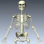 Belajar Anatomi Tubuh Manusia Secara Virtual Dengan The BioDigital Human