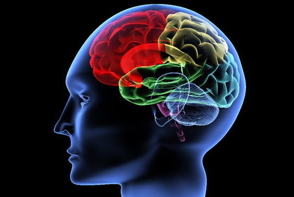 3 Tools Gratis untuk Mengoptimalkan Kinerja Otak