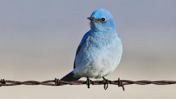 Cara Mudah Bermain Twitter Langung dari Desktop dengan Tweetz