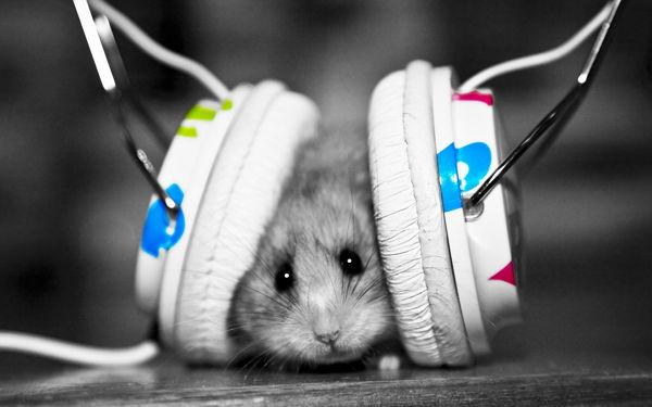 Mendengarkan Musik, Radio Internet dan Podcast dengan Clementine Audio Player