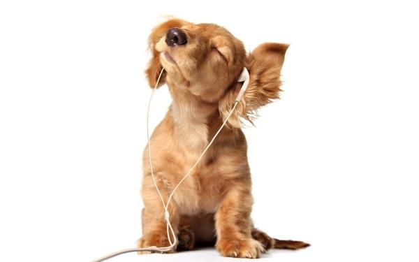 QuuxPlayer Aplikasi Pemutar Audio Sederhana dengan Fitur Radio Internet